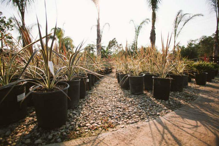 drought tollerant plants
