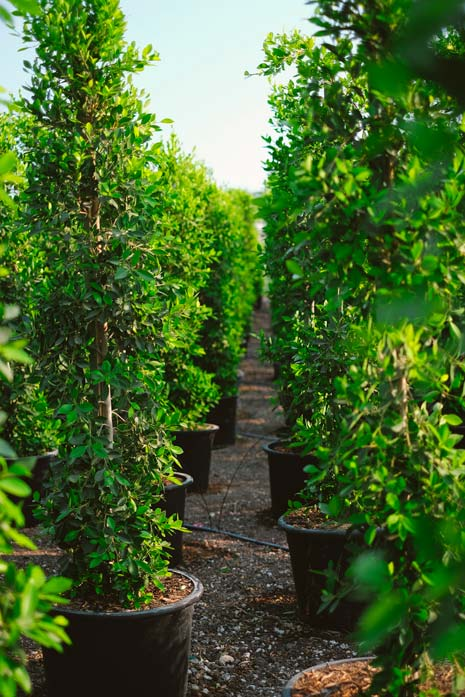 row of hedging materials
