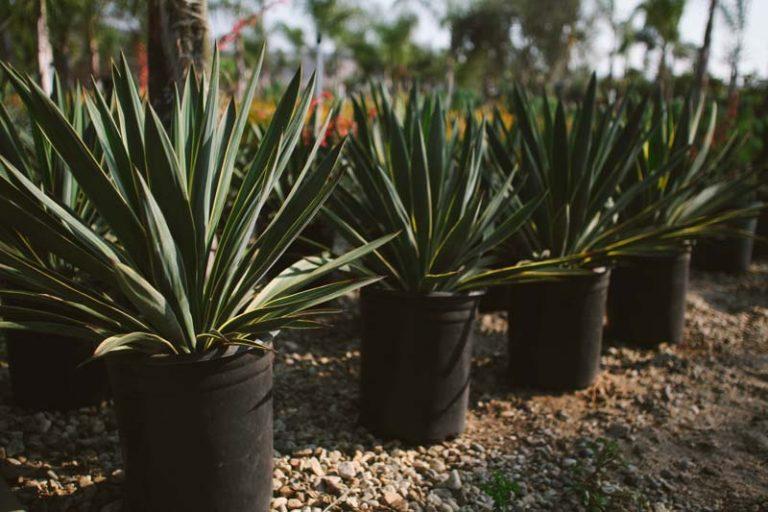 drought-tolerant plants