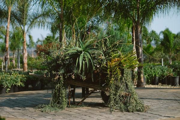 Potted plants in wheelbarrow